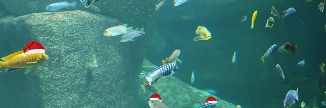Plongée de Noël 2021